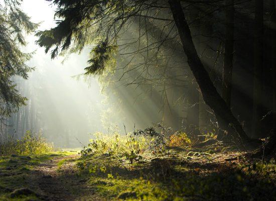 divine light